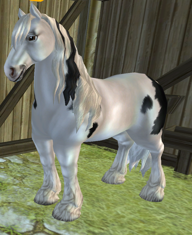 Shire Everything Star Stable